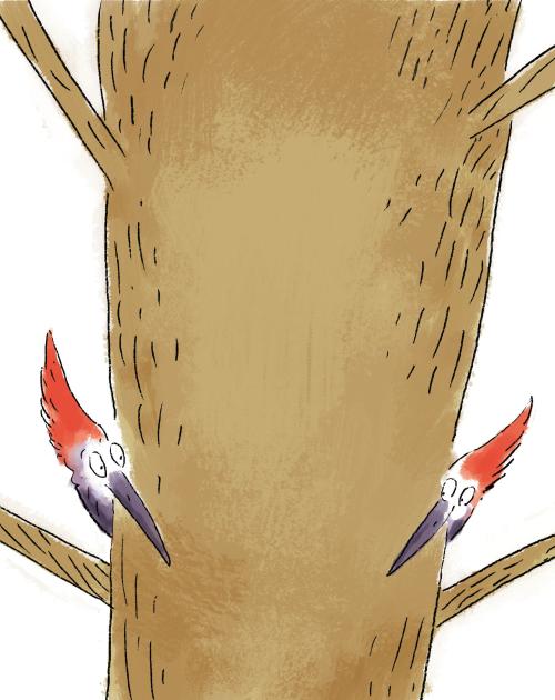 37woodpecker