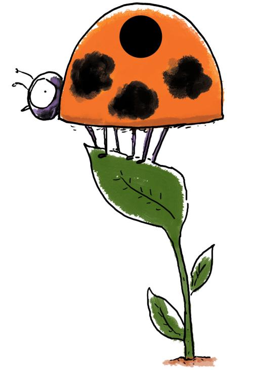 42ladybug