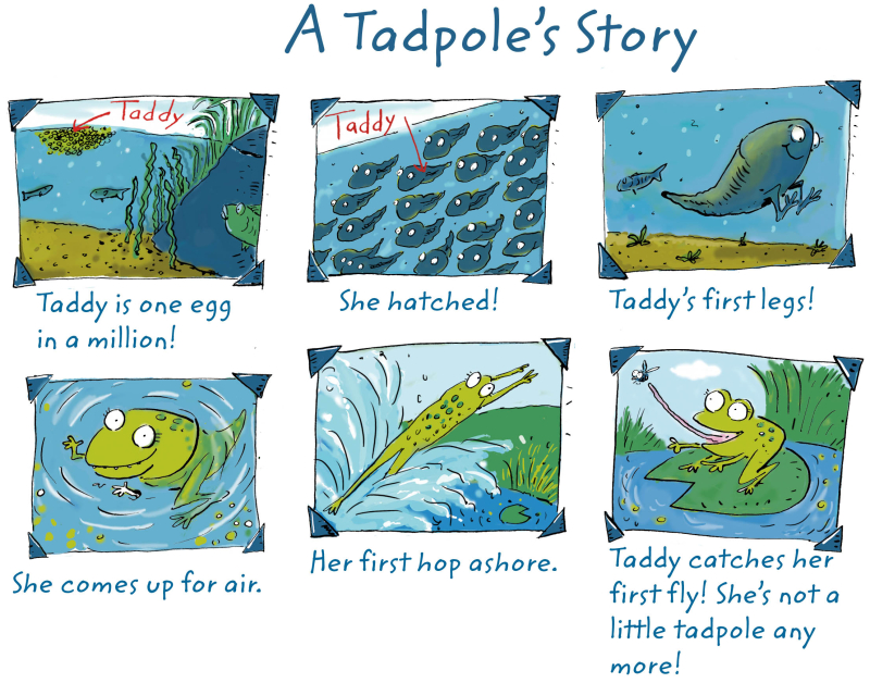 A Tadpole's Story