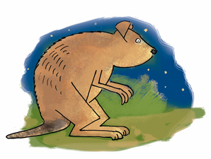 Finish with a starry sky since quokkas come out at night!